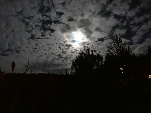k - new moon (1)